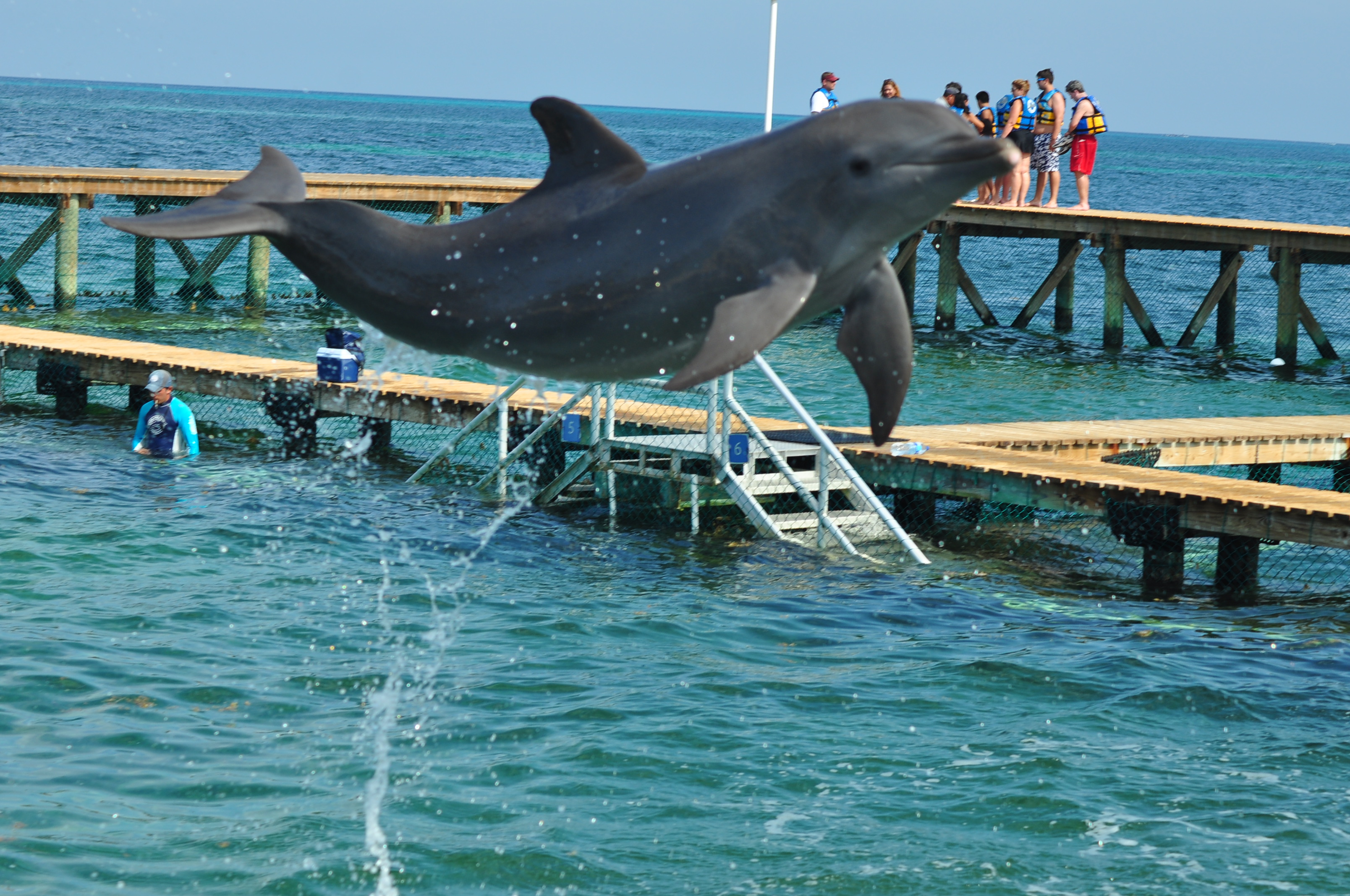 Nado com Golfinhos – experiência torta!