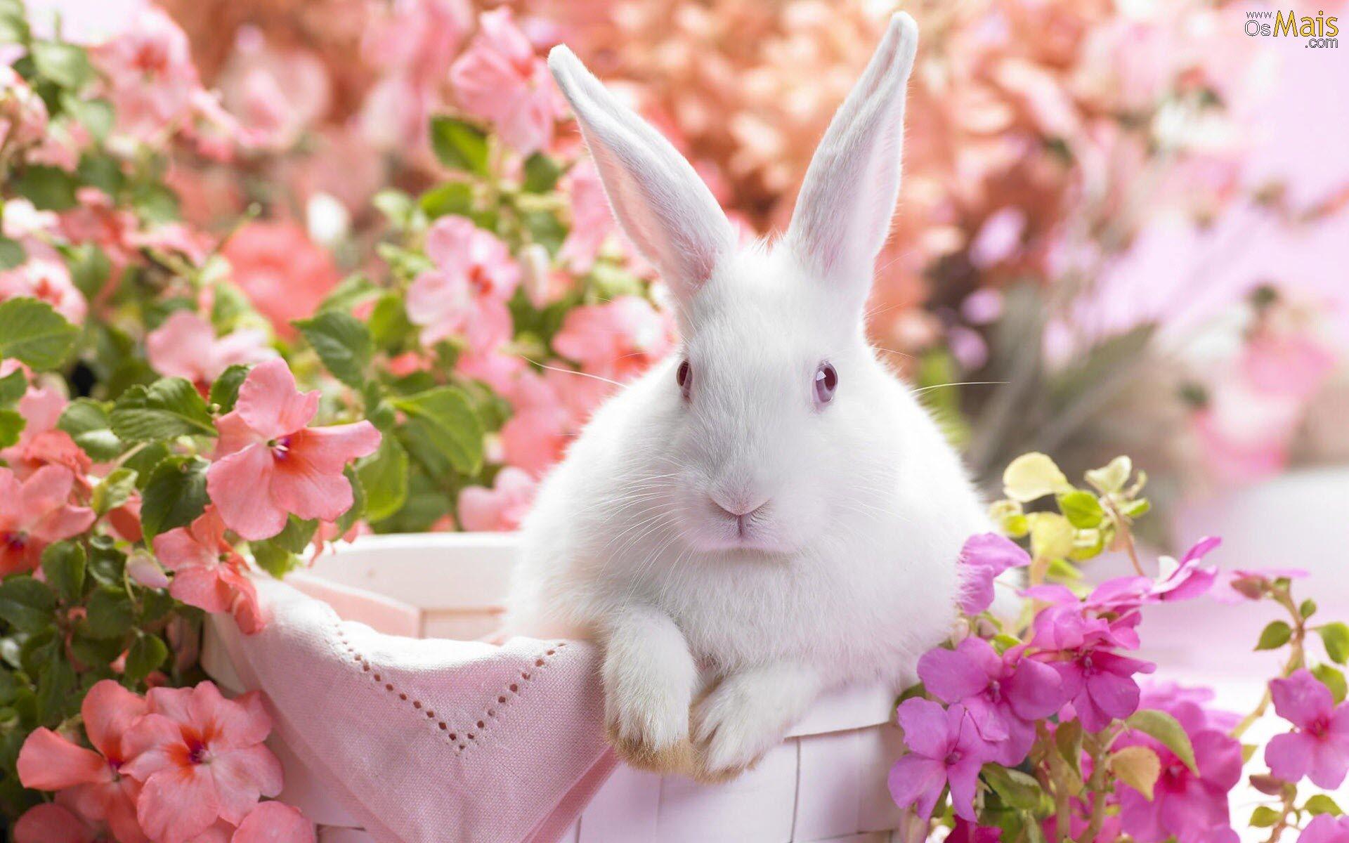 Coelhinho da Páscoa, que trazes para mim?